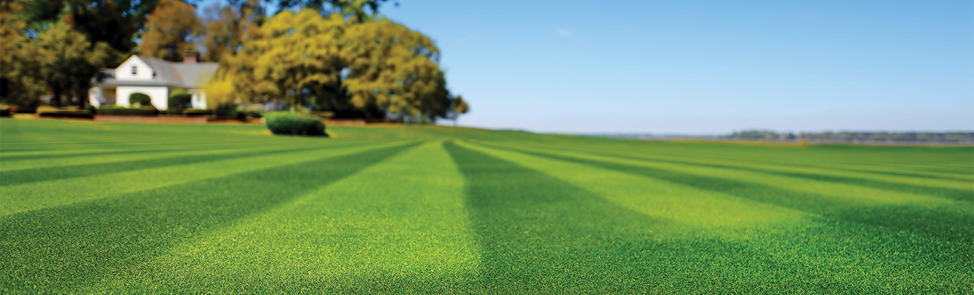 Maintaining Your Lawn Agiz Seed